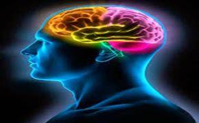 Resultado de imagen de El cerebro humano... Â¡Esa maravilla!