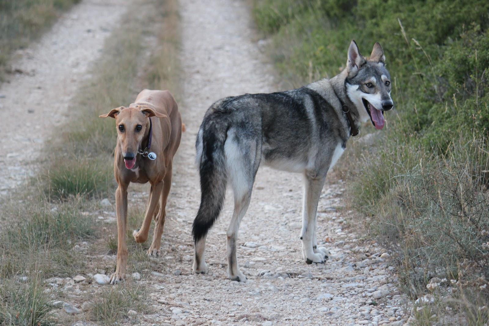 Chien rencontre chien