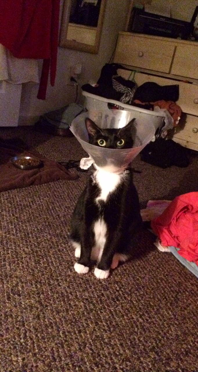 Funny cats - part 117 (40 gifs + 10 gifs), cat pictures, cute cat