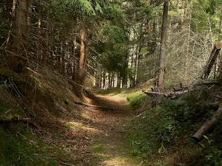 Gambar hutan indah di perancis