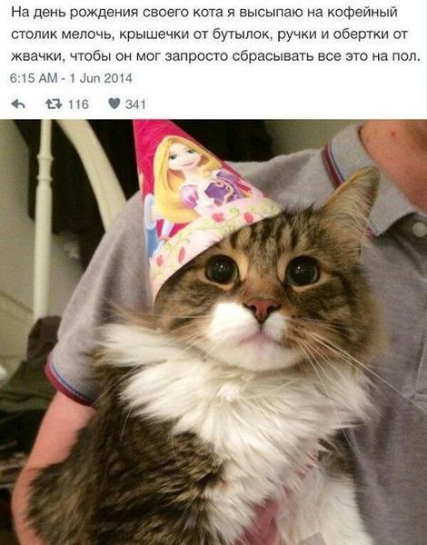 Лучший подарок это кот