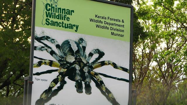 Tiger Spider, Munnar