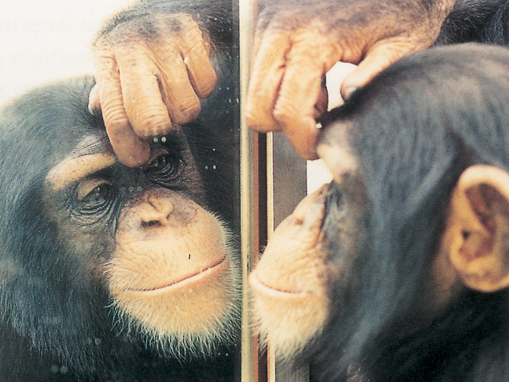 mark test of mirror self recognition A new mark test for mirror self-recognition  test could be a valuable new mark test for true self-recognition  mirror self-recognition in non-human primates.