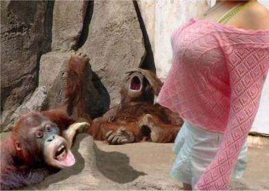 Berikut adalah Foto monyet - monyet lucu tersebut.