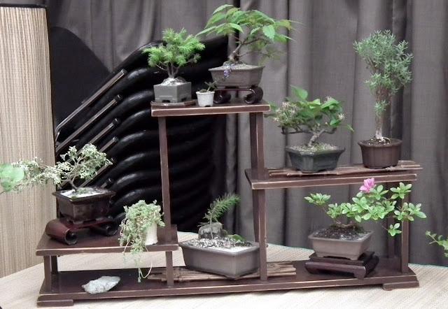 Mame bonsai - Spring Bonsai Show, Vandusen, Vancouver
