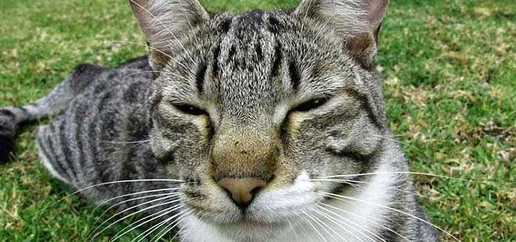 Kucing sedang tenteram di padang