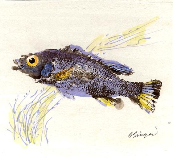 aloha letterpress gyotaku art of japanese fish printing