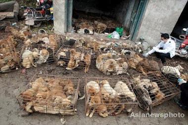 Fabricas y granjas de cachorros asi es como los traen, la mayoria enfermos, moribundos y muertos.