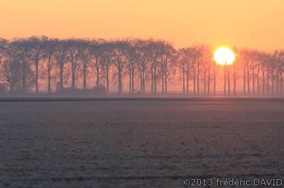 givre froid brume contre-jour silhouettes arbres matin soleil Fontainebleau Seine-et-Marne