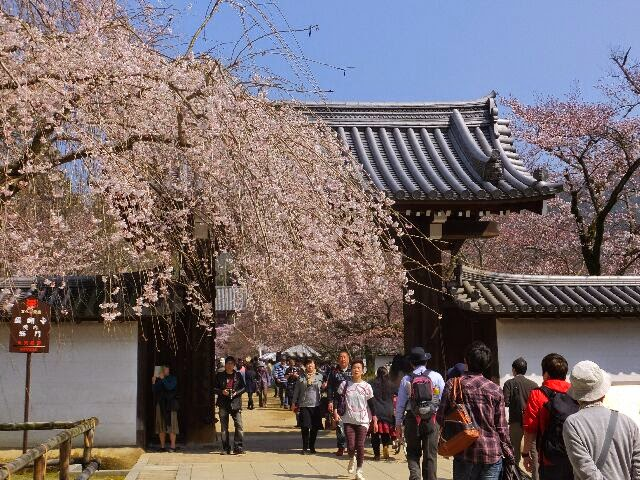桜見物に午後から行ったが沢山の人出だった。