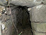 Interior de la barraca de vinya del Pou de Casagemes en la que s'aprecia el tronc de l'arbre que hi ha crescut