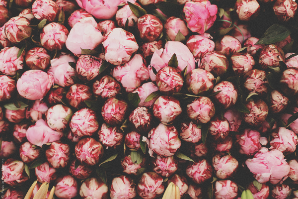 {travel inspiration | places : at the parisian flower markets}