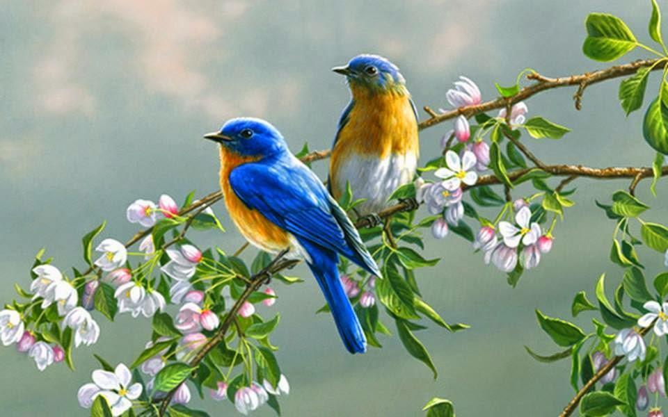 Pássaros Livres a Cartar...
