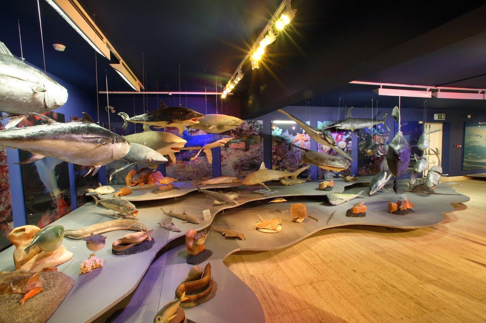 музей морской жизни кипр