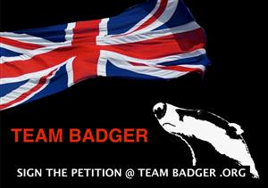 PLEASE HELP STOP THE BADGER CULL