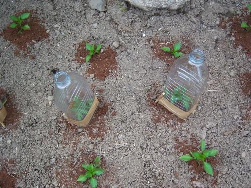 Mini invernaderos reciclados individuales - Mini invernadero casero ...