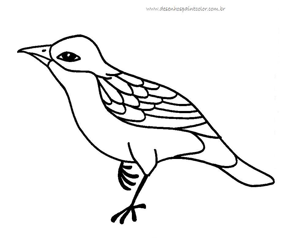 bird u00b4s park blog  dezembro 2011