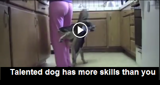 Talented dog has more skills than you