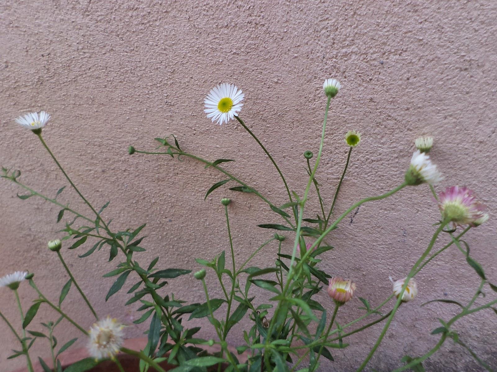 Il calesse e 39 vero che il mio giardino pieno di amici solo che sono muti elizabeth von arnim - Il giardino di elizabeth ...
