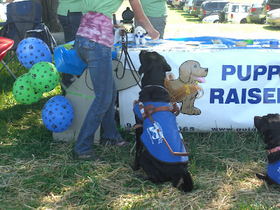Picture of Rudy in a sit/stay (in harness/coat) watching as a pick up some SEGDI flyers to hand out