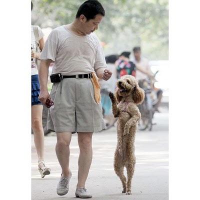 Gambar Lucu Anjing Berjalan Dengan Dua Kaki