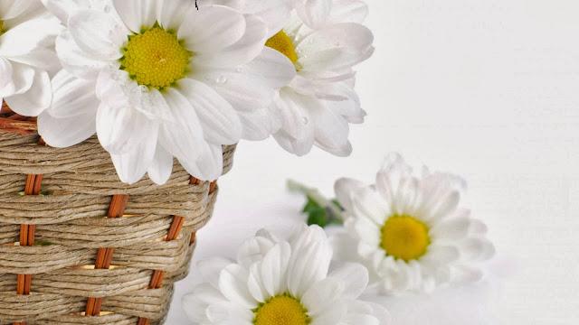 Fotos Flores de Margaritas