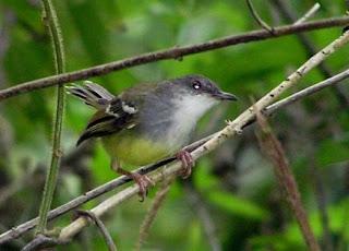 Budidaya Burung: JENIS-JENIS BURUNG YANG PALING DICARI ...
