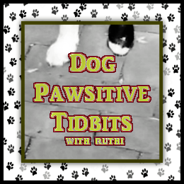 Read more about DOG PAWSITIVE TIDBITS with Ruthi