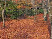 枯れ落葉がぎっしり敷き詰め絨毯のようだった。