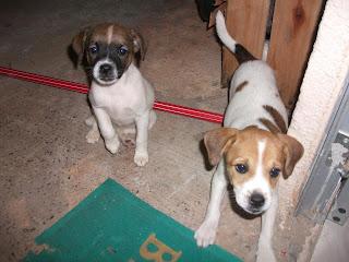 cachorrinhas adotadas