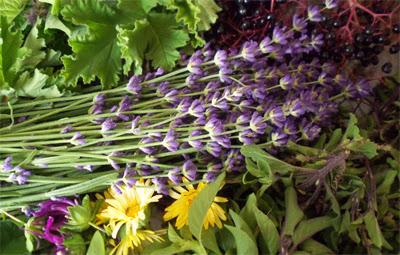 Αντιγριπικά βότανα