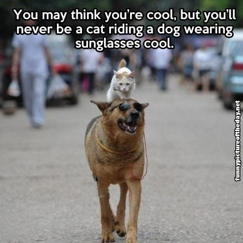 You-May-Think-You-Are-Cool-Funny-Meme-Cat-Riding-Dog-Wearing-Sunglasses-Animal-Humor.jpg