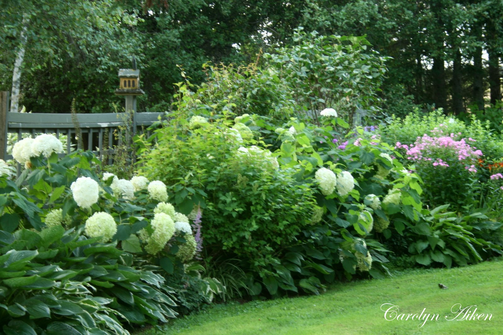 Through the garden gate real estate house and home for Garden shrubs