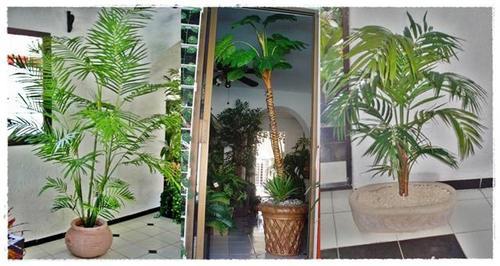 Oficina publica saludable c mo cuidar palmeras de for Iluminacion para palmeras