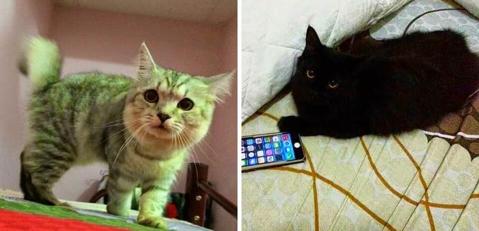 Kucing Hebat Hari Ini Jebat Mastura