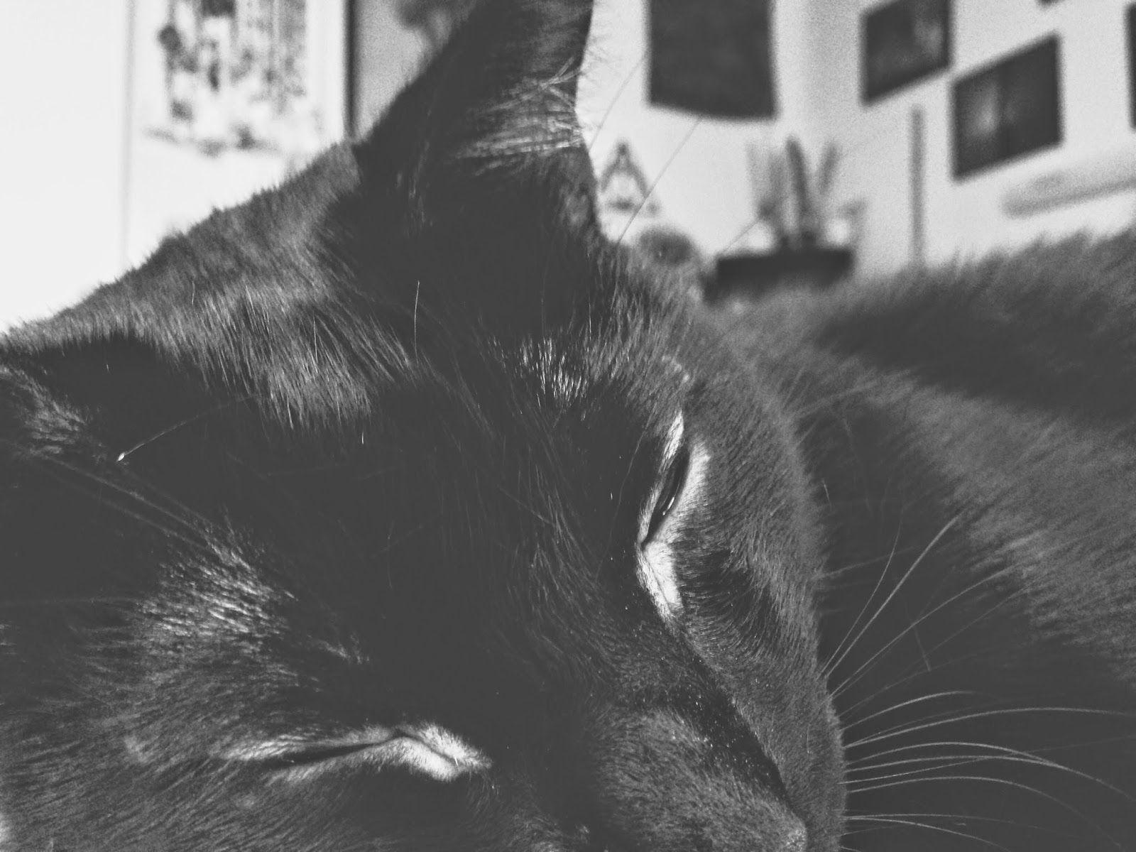 Courtney Tomesch Meelo Black Cat