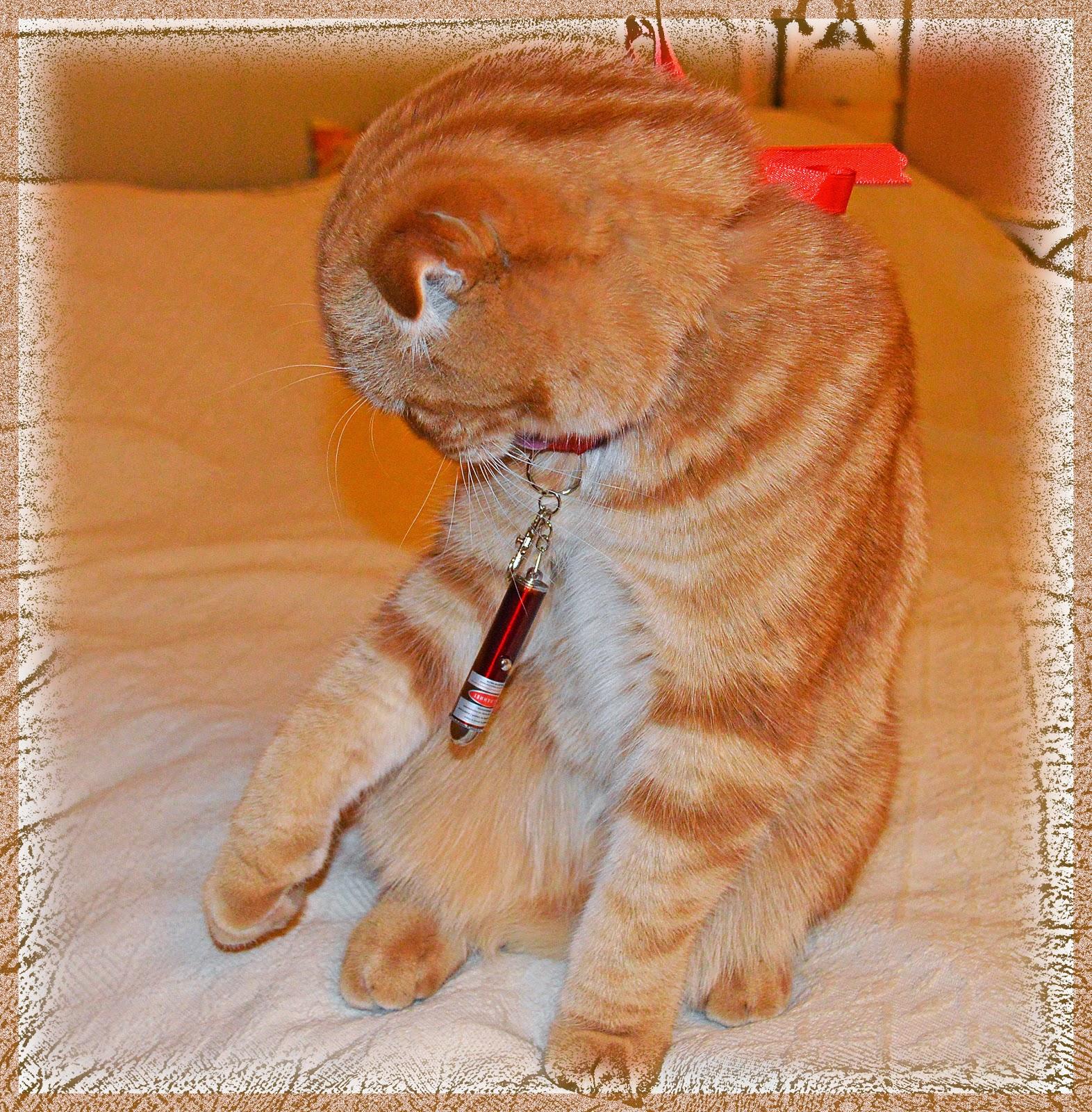 подарки для кота