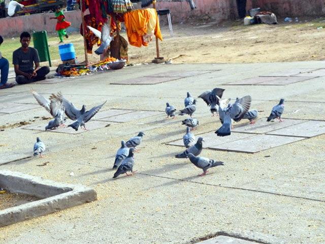 Birds Platform at Jal Mahal