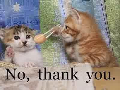 Cara Mengatasi Kucing Yang Tidak Mau Makan
