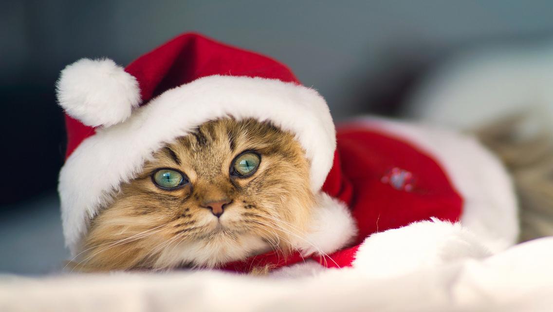 Christmas Cat - Free Download Cute Christmas Cat HD ...