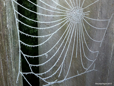 Frosty Web