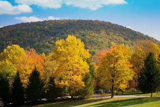 fall foliage at linden vineyards