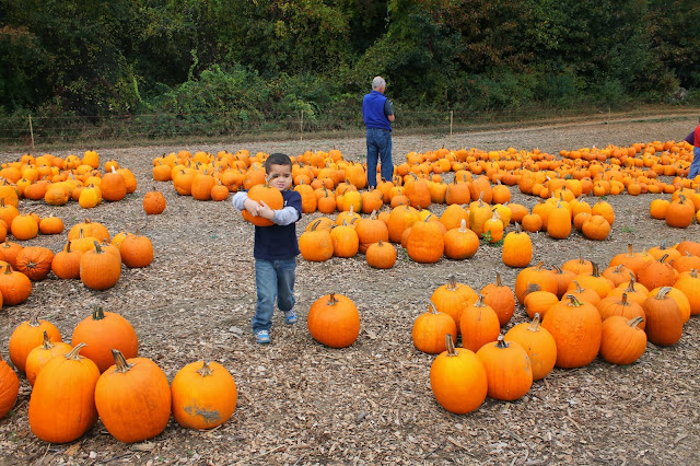 Pumpking Picking Tyngsboro Ma