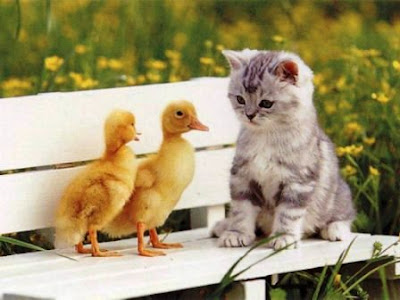 gatos curiosidades rarezas