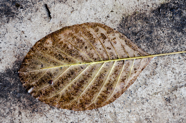 wet leaf on ground