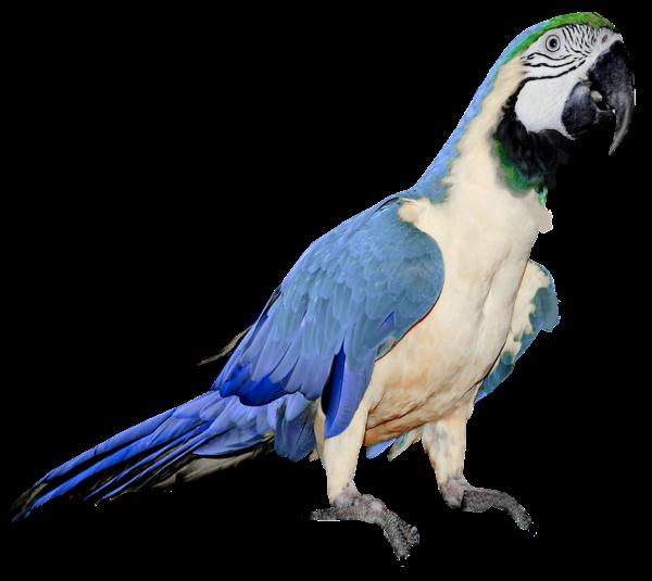 parrot_PNG712
