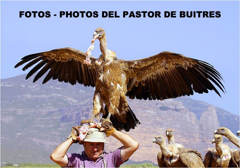 FOTOS - PHOTOS DEL PASTOR DE BUITRES