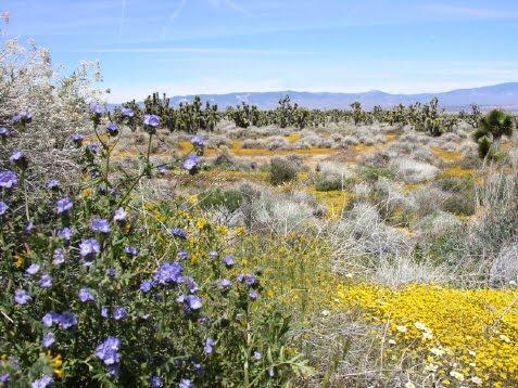 Hi-Desert Field Trip