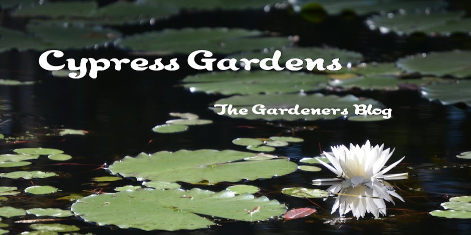 Cypress Gardens - the Gardeners Blog