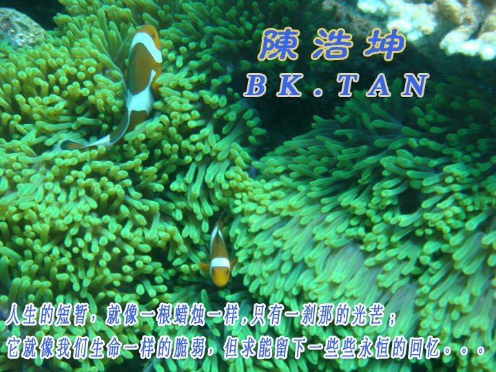 陈浩坤 BK.TAN